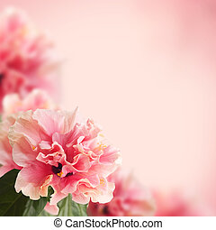hibiscus flowers - Nice background with hibiscus flowers