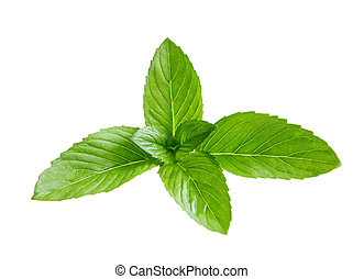 Spearmint - Fresh branch of spearmint mint leaves isolated...
