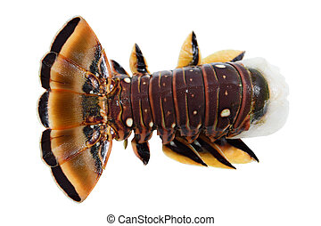 Caribbean Lobster - Frozen caribbean lobster tail isolated...