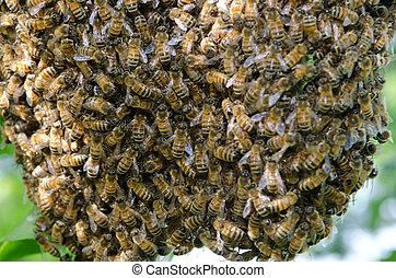 Enjambre, miel, abejas