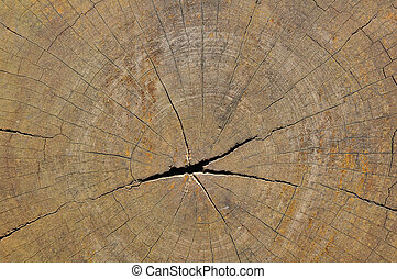 Wood cut texture