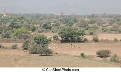 Panorama of Bagan