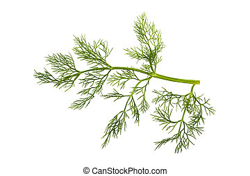 Sprig of fennel isolated on white