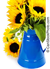 Sunflowers in a blue vase over white