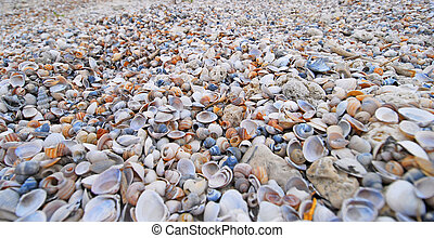 Many seashells - Many beautiful colorful seashells from the...