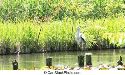 heron - I took the state that a heron flew.