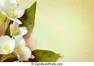 jasmine spring flowers on old paper background - spring...