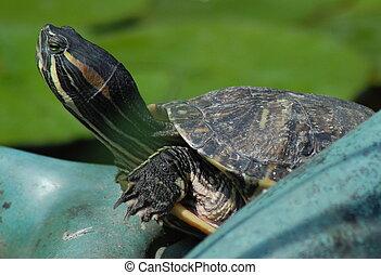Bog immagini e archivi bog immagini e for Tartaruga di palude