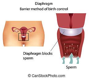 避妊薬, method-, 横隔膜