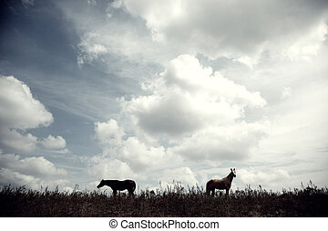Horses - Silhouette of two horses outdoors at the evening