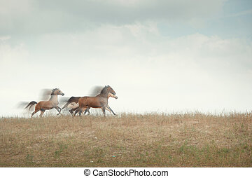 Speed - Three horses running in the field Natural motion...