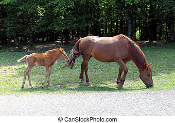 Big horse and little - big and little horse walking