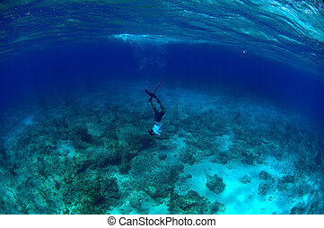 Man free diving and spear fishing - Man spearfishing and...