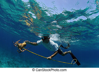 Man spearfishing for lobster - Underwater image of man...