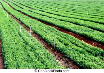 Green Crops in a Field