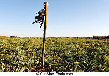 Dead Crow in Field - A dead crow hang in a watermelon field...