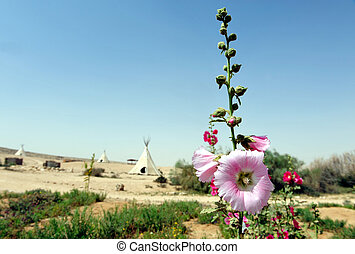 Pink Gladiolus and White Tepee Tents - Pink Gladiolus in the...