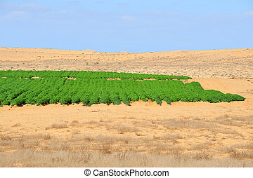Agriculture - Growing in the Desert - Desert farming in the...