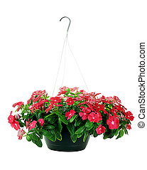 Hanging Impatiens - Hanging Basket with Impatiens flowers...