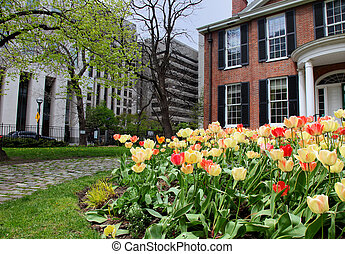 tulip flower bed in the city