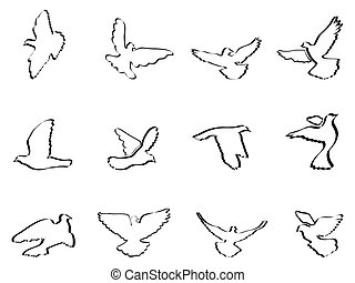 shape of pigeons and doves - isolated some pigeons and doves...