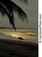 Surfing in early morning - A man carrying his surfboard to...