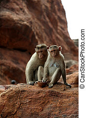 Twosome - Two monkeys sitting prettily in diverse moods on a...