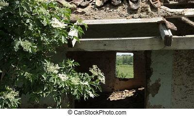 Ruined Farmhouse