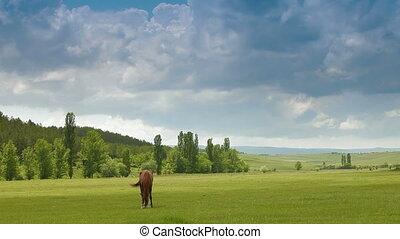 Brown Horse Grazing In Pasture
