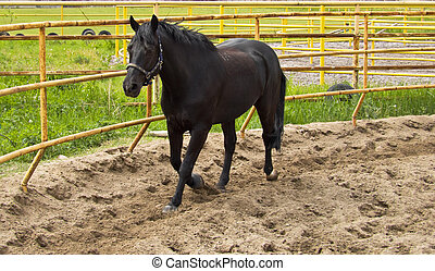 horse in an enclosure outdoors