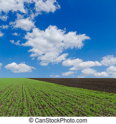 field with green shots and cloudy sky