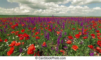 Colorful Blooming Spring Field - Colorful spring blooming...