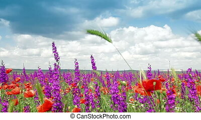 Blooming Spring Field - Colorful spring blooming field -...