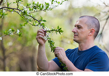 Agronomist checking cherry tree flowers - Portrait of an...