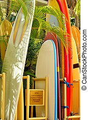 Surfboards - Colorful surfboards standing amongst tropical...
