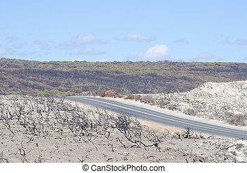 After bushfire Australia - Burnt down landscape after...
