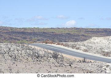 After bushfire Australia - Burnt down landscape after...