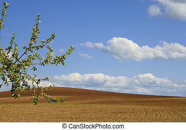 the plowed fields