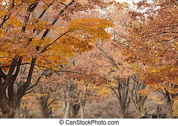 orange fall colors