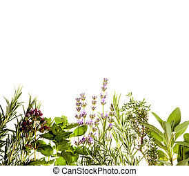 Herbs border on white - Mediterranean herbs on pure white...