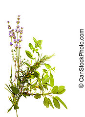 Bunch of herbs on white - Bunch of Mediterranean herbs on...