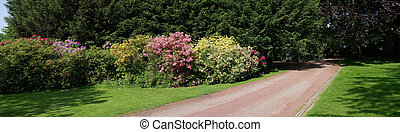 rhododendrons in a park