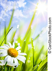natural, verão, fundo, margaridas, flores, capim