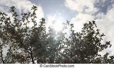 Sunbeams through blooming sprigs