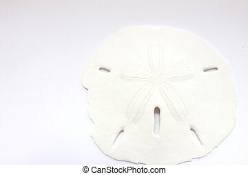 Sand Dollar - Isolated sand dollar on white background