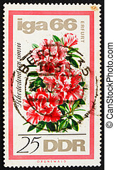 Postage stamp GDR 1966 Rhododendron - GDR - CIRCA 1966: a...