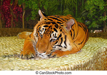 Lying red tiger. The Thai zoo.