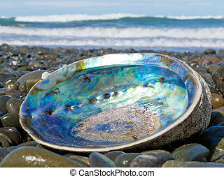 Shiny nacre of Paua shell, Abalone, washed ashore - Beached...