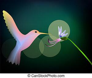 Colibri hummingbird