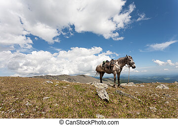 harnessed horse against mountains